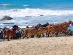 Cangrejo y Toro   -    Beach Scene
