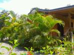 Privacy with tropical vegetation