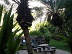 BBQ grills are located in a beautiful tropical garden. Eat here, on the lanai or at the beach!