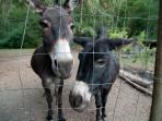 Coco and Sicily-resident donkeys