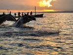 Sunrise dolphine watching