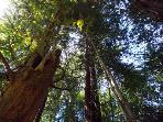 The Hungry Tortuga, Redwoods, Wine Country Rental