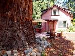 The Hungry Tortuga, Large Redwood, Sonoma County Rental