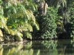Tropical rivers