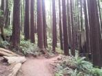 Redwood Parks to the North & South.  You will not run out of new, exciting things to do here!