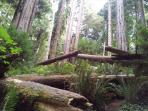 Redwood National Park 10 minutes away