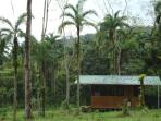 Looking at the cabina from the side, nestled in cedar and cacao (chocolate) trees.