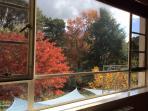 Watch the seasonal foliage  from upstairs living room....