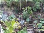 lava stairway in private back yard