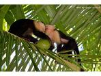 Whiteface Monkeys visit home