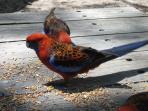 Bird life is plentiful.
