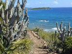 Our Private rough hewn path to an Amazing snorkeling beach, 60 yards below