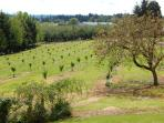 New growth of recently planted hazelwood trees