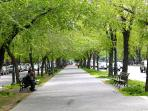 EASTERN PARKWAY IN THE SPRINF/SUMMER