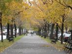 EASTERN PARKWAY IN THE FALL