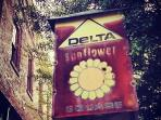 Delta Sunflower Square