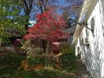 Fall color on the side yard
