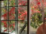 Fall color from the kitchen