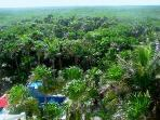 Mayan Jungle and Pool from Rooftop