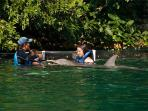 Swimm with dolphins at the marina