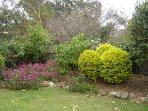 Back garden in spring