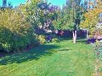 Spacious back yard with 17 different kinds of fruit