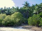 Natural mangrove beach down at the Villa