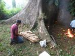 Mayan  shaman praying around a1000 year old sacred tree on property