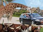 Givskud Zoo 8 km. - go for a Ride on safari among wild animals