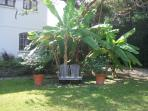 Double Muskoka chairs in front yard beside parking area, surrounded by banana trees!