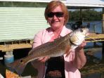 redfish from dock