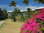 Beautiful Tropical Gardens at Colony Cove