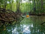Kayaking inside the mangroves