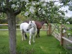 Our horses - there are cats, dogs and chickens for you to enjoy as well