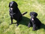 Our dogs - Coco and Golly - bring yours!