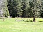 Lots of deer in the area