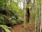 Walk in our Bush