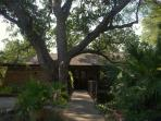 Monterey Oak and Driveway to the Left
