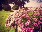 Garden fully of flowers