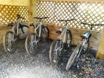 Bike paddock with 4 bikes