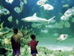 Visit Sydney Aquarium