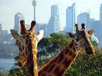 Visit Taronga Zoo. Only 20 minutes from apartment