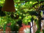 La Vedette Villa Margarita Gran Canaria - Garden