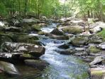 The Beautiful Creek in the backyard