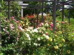 Rose Garden in Spring.