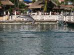 Dolphin Area