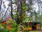 The rainforest hideaway awaits you...