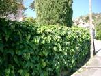 The hedge around the villa
