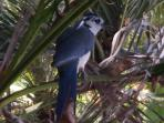 Bluejays nest in trees surrounding the garden