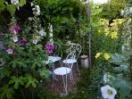 Hollyhocks and evening primrose